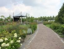 Limmen-tuin-barg-natuurlijk-siergrassen-castricum-gras-admiraal